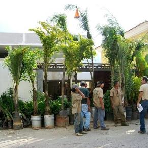 Productos Botánicos, Sustratos Naturales y Mano de Obra Especializada