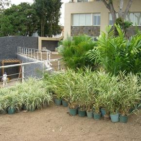 productos-botanicos (37).JPG