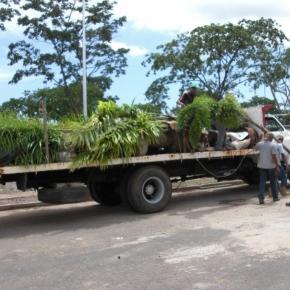productos-botanicos (5).JPG