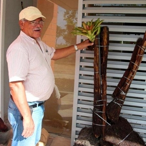 Instalaciones con Plantas Exóticas