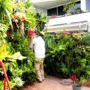plantas-exoticas (10).JPG