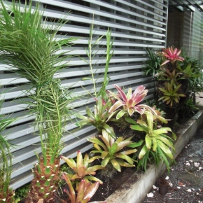 plantas-exoticas (5).JPG