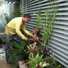 plantas-exoticas (6).JPG
