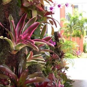 plantas-exoticas (7).JPG