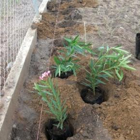 productos-botanicos (3).JPG