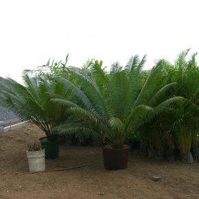productos-botanicos (36).JPG