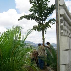 productos-botanicos (38).JPG