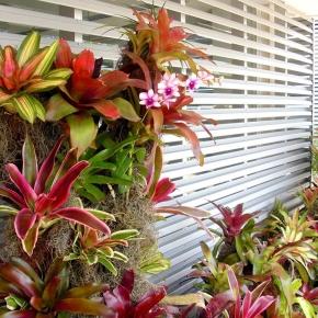 plantas-exoticas (2).JPG