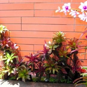 plantas-exoticas (3).JPG